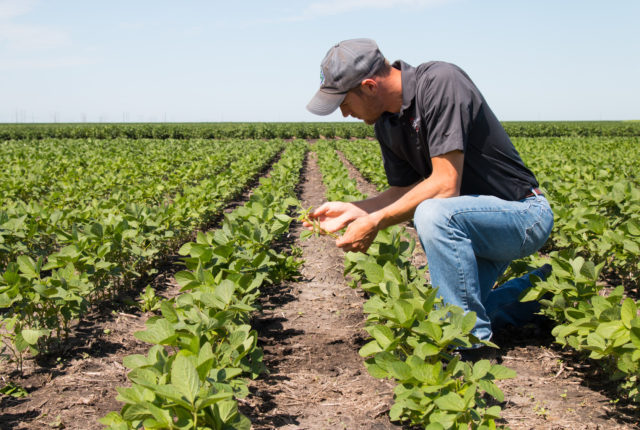 Relationship Between Yield and Labor