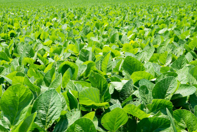 Domestic and Foreign Markets for Soybeans