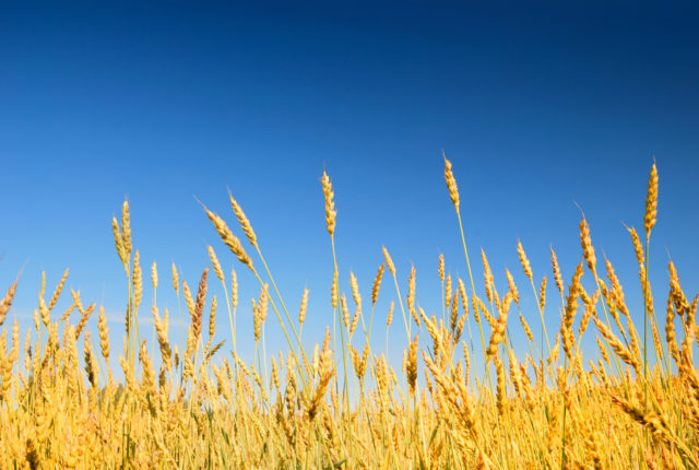 Economists on Cover Crops